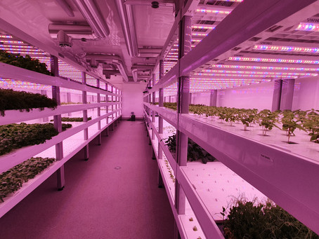 Green Build Systems Vertical Farms