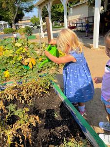 The Agricultural program at Fairmont tea