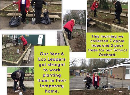 Ryhall CE Academy orchard tree planting