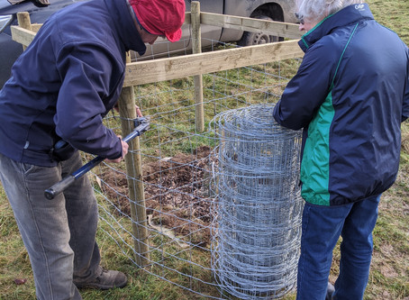 New planting in Priory Field Orchard