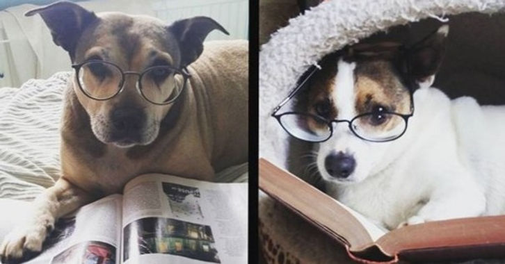 Tilly and Jack have had a relaxing afternoon reading 🐶📖🐶📖_edited_edited.jpg