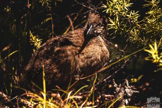 Matthew Musson | Tasman National Park