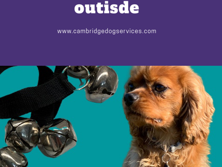 Train your dog to ring a bell to go outside