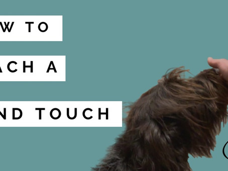 How to teach a Hand Touch to interupt bad behaviours