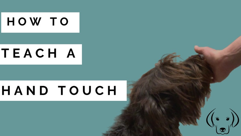 how to teach a dog a hand touch command