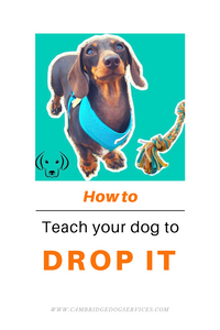 How to teach a drop it cue