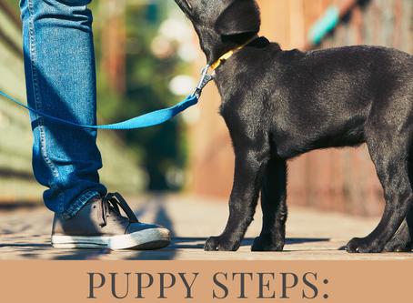 Puppy's first walk