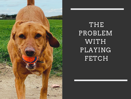The problem with playing fetch!
