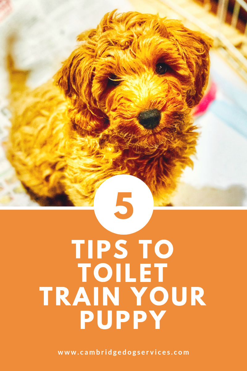how to toilet train your puppy