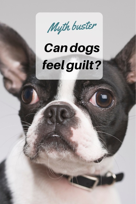 can dogs feel guilt?