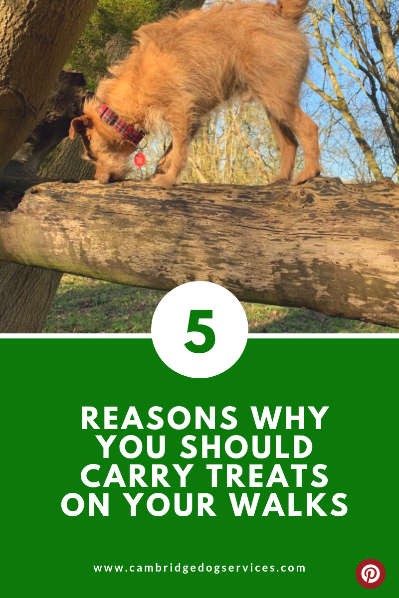 5 reasons why you should carry treats on your dog walks