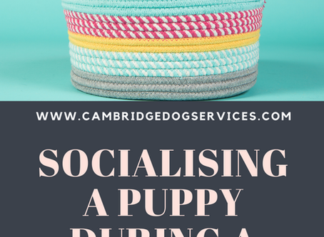 How to socialise your puppy during Covid-19