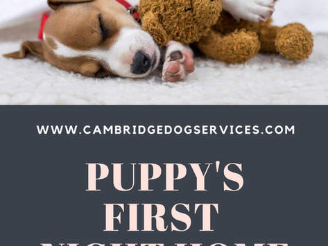 Puppy's first night home
