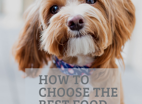 How to choose the best dog food for your  puppy?