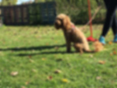 Dog classes in Cambridge, Cambridgeshire