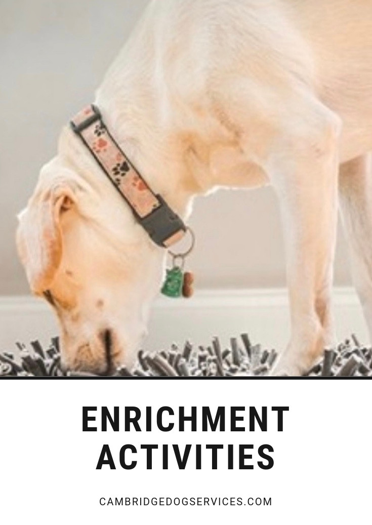 enrichment for dogs