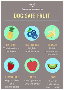 food that is safe for dogs to eat