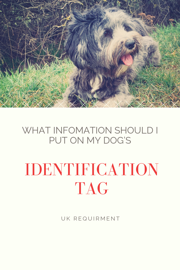 What information is required on a dog's ID Tag