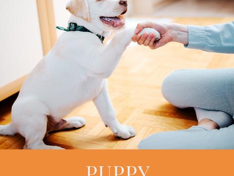 Puppy essentials list