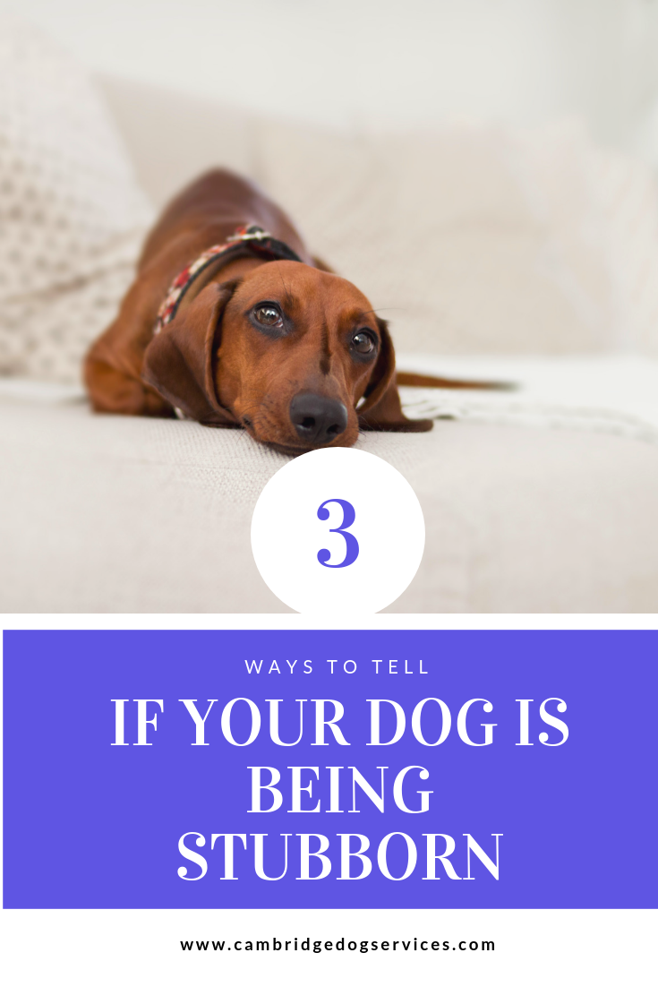 Is your dog being stubborn?