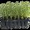Thumbnail: Will'up - Kit 28 saules / wilgen / willows
