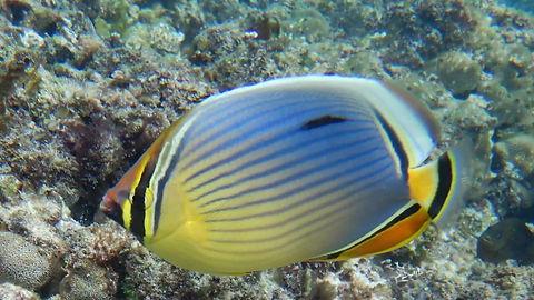 die region Seychellen sind auhc unter Wasser sooooo beeindruckens bunt, man fuehlt sihc fats wie in einem tollen Aquarium