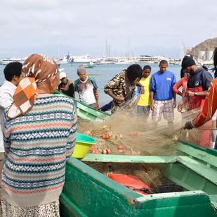 die Fischer teilen den Fang am Strand, ein Teil wird verkauft einen Teil bekommen die Familien der Fischer