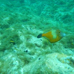 mitsegeln Karibik, viele Fische