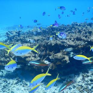 traumhaft auch unter Wasser, Seychellen Mitsegeltoern