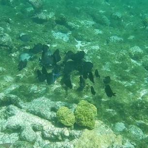 Karibik unter Wasser