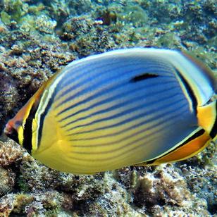 mitsegeln Seychellen, traumhafte Unterwasserwelt
