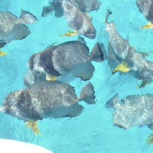 bunter Unterwasserwelt, traumhafte Seychellen, mitsegeln