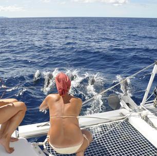 mitsegeln, Delfine beobachten