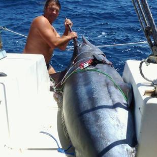 Thomas hat mal wieder einen maechtigen Marlin gefangen, segeln und fischen mit Skippytirol