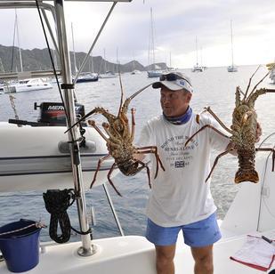 frische Langusten - zu einem fairen Preis gekauft vom Fischer, gehoeren zu einem Karibik Segeltoern einfach dazu