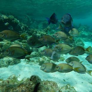 mitsegeln Karibik, Mitsegeltoern, spannend ueber und unter Wasser