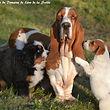 elevage de chien : domaine leon de la seille