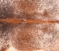 cowhides, tannery colombia leather, cow hide