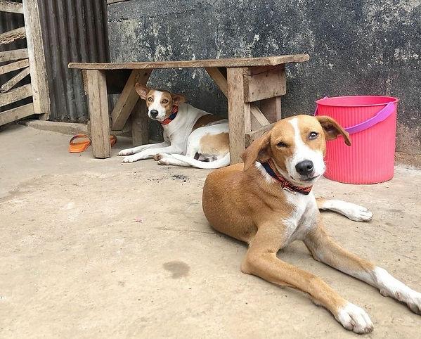 two-stray-dogs-sierra-leone.jpg