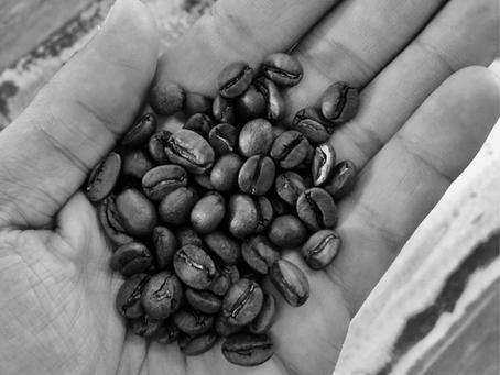 Curiosidades Coffee Place - Início