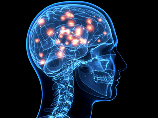 The Mind's Biology