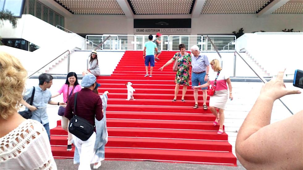 Tapis Rouge. La Star de Cannes