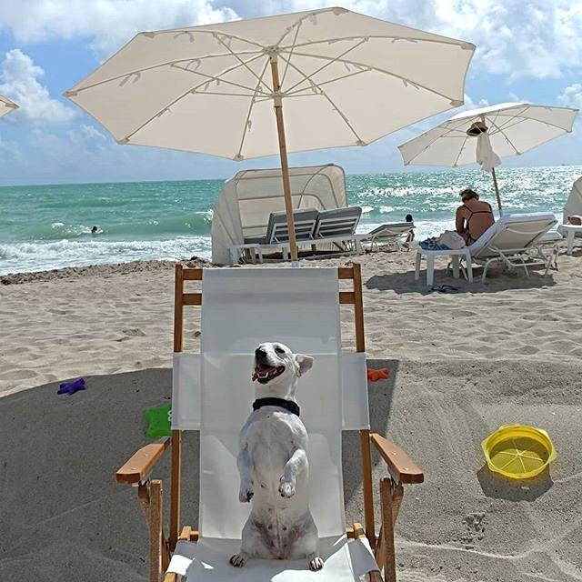 Bain de soleil a Miami