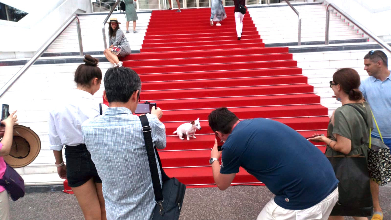 Red Carpet in Cannes a little Fashionista