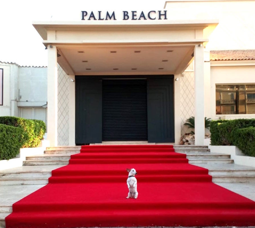 Tapis Rouge Palm Beach Cannes