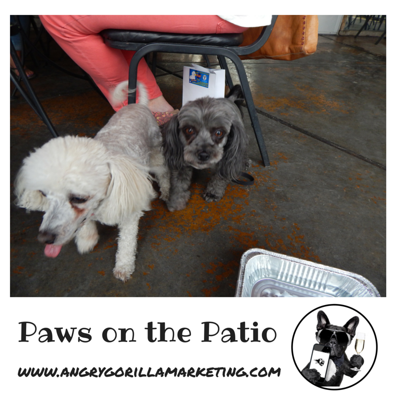 Paws on the Patio Event 14.png