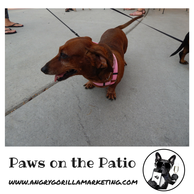 Paws on the Patio Event 10.png