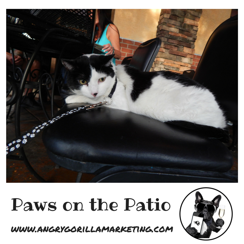 Paws on the Patio Event 9.png