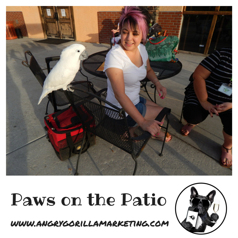 Paws on the Patio Event 2.png