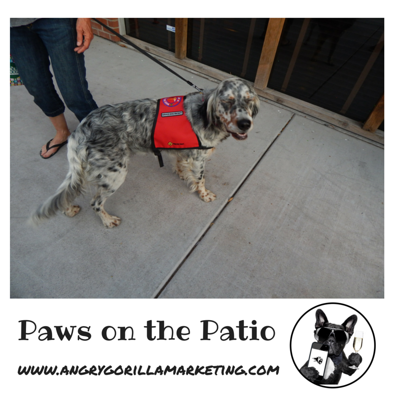 Paws on the Patio Event 4.png